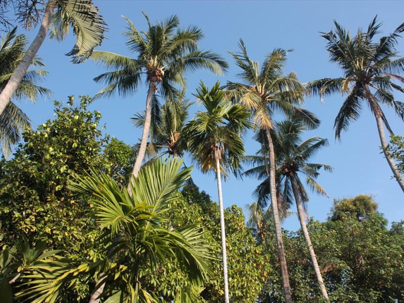 coconuts lots